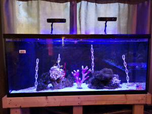 55 gallon Reef ready tank and stand only