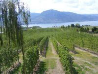 2 suites 1b/1b  in a View Orchard 5 minute to downtown Penticton