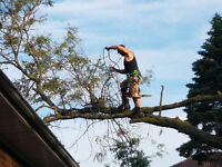 Tree Care. Tree Removal .  Arborist Reports.  Great Rates.