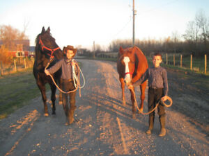 Horse rides for kids (and grownups)