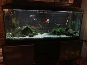 Aquarium 120 Gallon Equipé