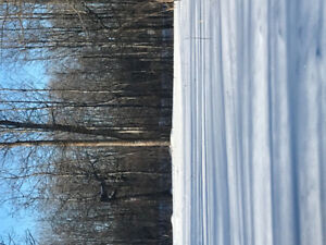 Large cleared lot with mature trees ready for your dream home