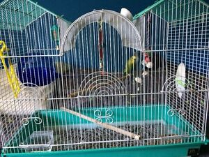 Cage and 2 budgies
