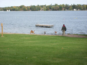 Relaxed Home-based Boarding and Daycare For Your Dog Kawartha Lakes Peterborough Area image 3