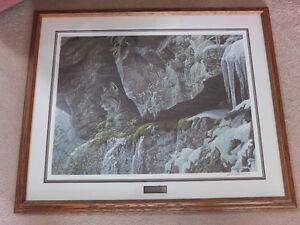 Bateman At The Cliff Bobcat