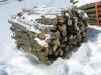 bush for fire wood