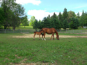 Quality, caring horse board with indoor arena