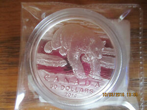 Love Polar BEARS? Pure Silver $50 dollar Canadian Polar Bear