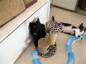H.A.R.T. MOM AND KITTENS LOOKING FOR THEIR FOREVER HOME.  =^..^=