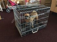 Dog cage, dog carrier, small to medium.