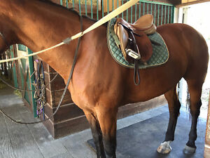 Used Frank Baines Saddle for sale