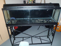 40 Gallon Fish Tank with Stand and accessories