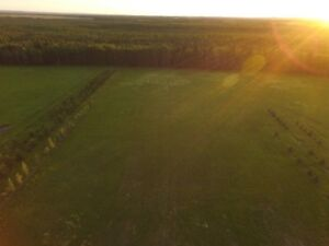 Quiet acreage, blank canvas land