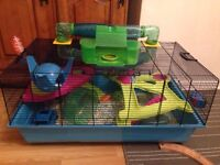 3x Hamster boys with large cage