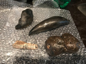 ANTIQUE PETRIFIED WHALE TEETH CROCODILE COPROLITE