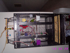 Green Cheek Conure Parrots with Large cage London Ontario image 7