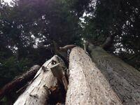 FS TREE SURGEONS & GARDENERS