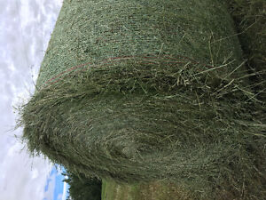 1750lbs Round Bales 65% Alf 35@% Timothy & Brome