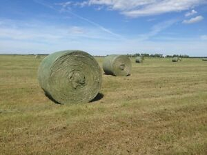 Horse and Livestock Hay for Sale - Leduc, AB