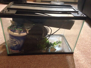 Fish tank with accessorises