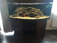 Juwel Vision 450 5ft Fish Tank Full Set Up