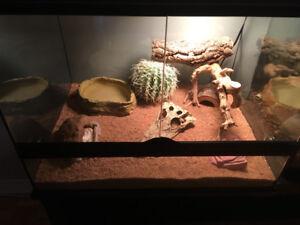 Python royal et Gecko leopard
