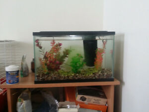 Fish Tank w/ Fish and accessories.