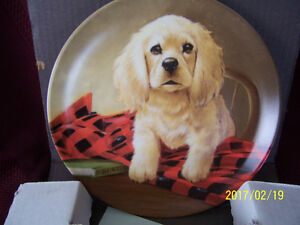 "COCKER SPANIEL ~ ""Shirt Tales"" ~ 1988 Knowles Collector Plate"