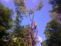 Bayridge Tree Service