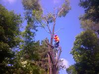 Bayridge Tree Service