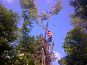 Bayridge Tree Service Kingston Kingston Area image 2
