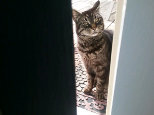 Tabby to be rehomed