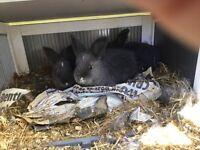 5 Beautiful Baby Rabbits