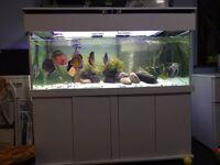 Fish tank full set up (5ft x 2ft x 2ft)
