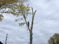 Tree removal, Tree pruning, Drone recovery, Yard clean up