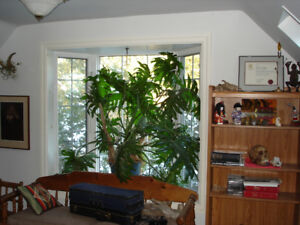 Large House Plant and Cactus