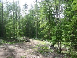 5.5+ acres for sale Revelstoke British Columbia image 2