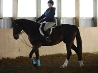 Summer Riding lessons