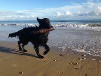 Wimbledon Dog Walking