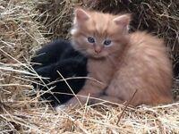 Gorgeous kittens ready to go