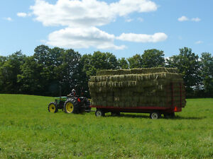 Horse Hay Small Squares Cow Hay