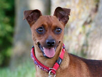 Saucy- Very Sweet girl, used to other dogs!