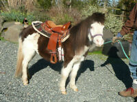 "Two 31-32"" Beautiful Miniature Horses REDUCED"