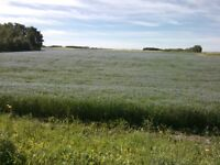 GOOD SASKATCHEWAN FARMLAND QUARTERS WITH LEASE