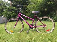 Daser Triumph bike