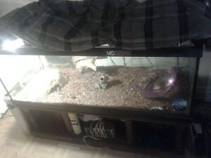 pyton royal avec aquarium lumiere plaque chaufante