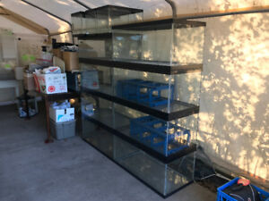 Retired Snake Breeder Supplies-phone calls only