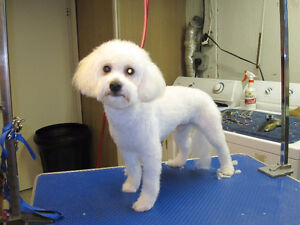 My Pet's Spot grooming and Pet Care London Ontario image 2