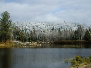 *60 acres.Business opportunity with a small private lake with tr