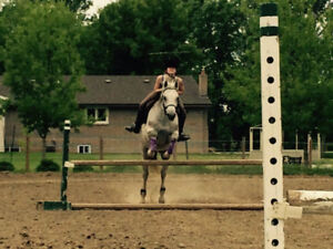 Advanced Dressage/Hunter Horse for Lease